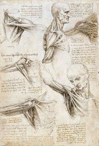 anatomicalstudiesrc